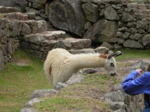 Peru0261